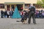 Hundesport_12