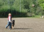 Hundesport_4